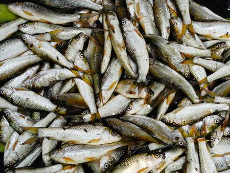 india fisherman: Fresh fish in the market