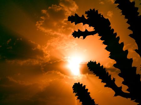 Cactus Plants Silhouette photo