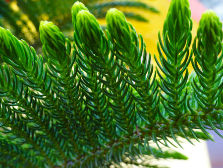 stubbornness: Designers Tree with fresh green leaves Stock Photo