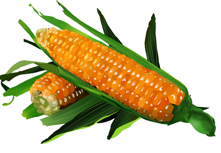 keep up: Illustration of Corn on White Background