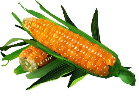 Illustration of Corn on White Background