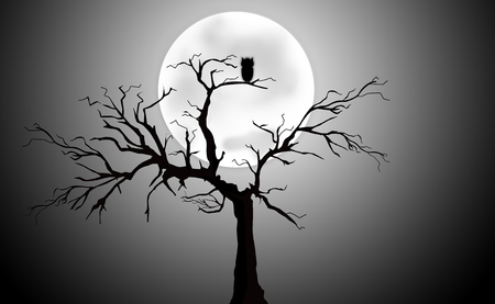 moon  owl  silhouette: Full Moon Light Night with Tree Silhouette and owl