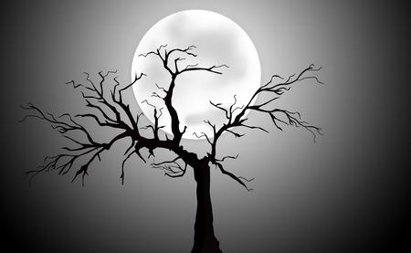 coniferous forest: Noche de luna llena con silueta de árbol
