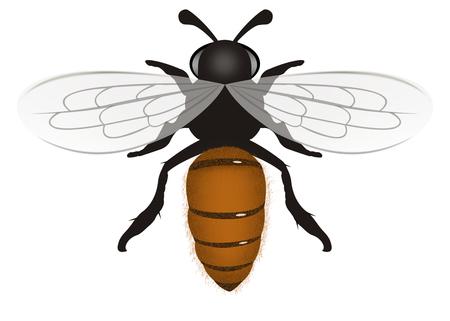 Bee illustration isolated on White  Background Stock Photo
