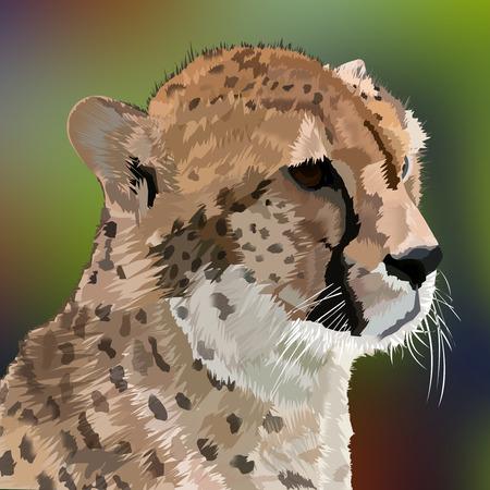 cheetah cub: Leopard, Big Cat, Wild Life Illustration Stock Photo