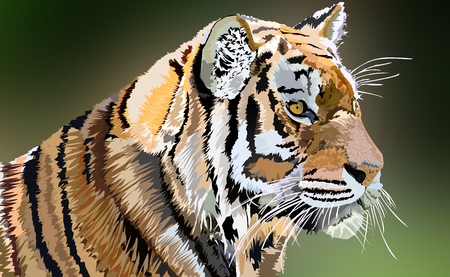 Royal Tiger, Big Cat, Wild Life Illustration Stock Photo