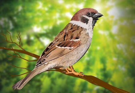 Sparrow Sitting on Tree Branch illustration.
