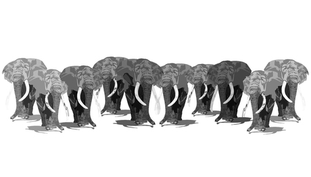 African Elephants Walking Together, Illustration Isolated on White Background 版權商用圖片