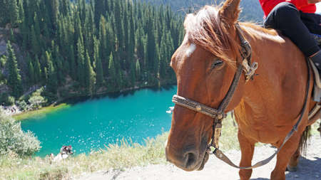 Horse on the background of the mountain lake Kolsay. A calm horse watches. Brown eyes. Beautiful background, green fir trees, lake, grass and hills. I stroke the horse with my hand. Kazakhstan.