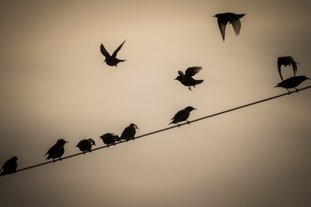 A small flock of birds gathered on a wire against the calm evening sky. It was peaceful as they were socializing among themselves.