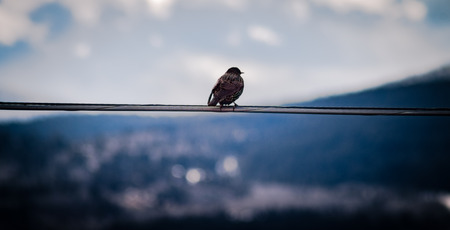 A bird sits on a wire gazing off into the landscape.