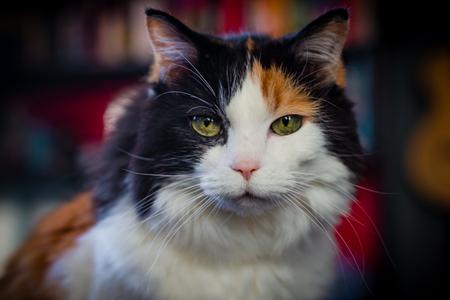 A portrait of an elderly cat.