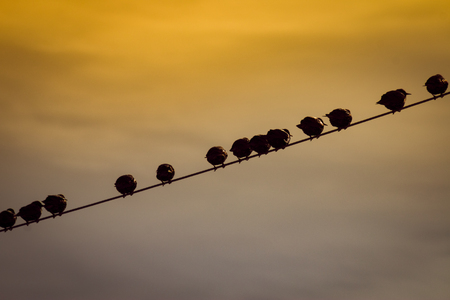 Birds collected on an electrical wire handing above my backyard. Their silhouettes against the evening sky, as they conversed among each other, was very peaceful. Stock Photo
