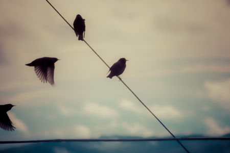 A flock of birds flying and perched on a wire. Stock Photo