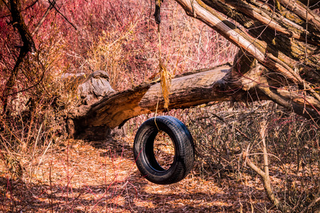 A tire swing set up in the woods.