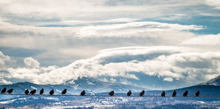 Birds gather on a wire, overlooking a backgound of snow-covered mountains and a cloudy blue sky in this panorama.