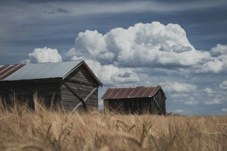 Vintage farm shacks sit abandoned in a golden grain field, against a cloudy blue sky. Stock Photo