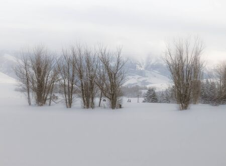 Old trees sit barren in a snow-covered field against a foggy moutntainside, while a light dusting of blowing snow sprinkles the landscape.