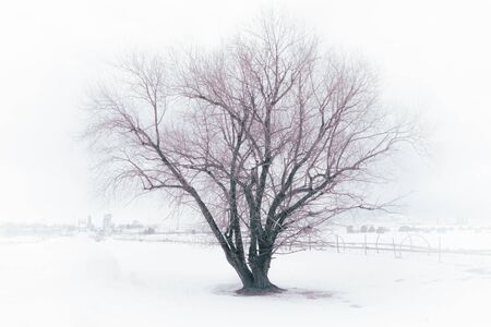 An old barren tree sits in a foggy snow-covered field. An old sprinkler system awaits Spring on the farm. In the distance, a bridge crosses a river to a rural town. Stock Photo