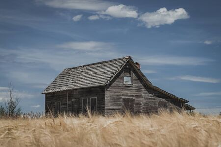 An abandoned and weathered wooden house sits in a rural wheat field against a bright blue sky.