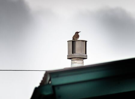 A woodpecker sitting on a home roof vent, against a cloudy sky.