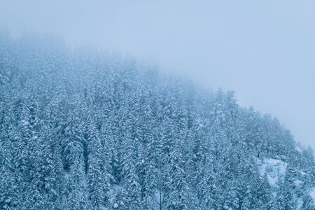 A chilly close-up look at the fog covering the dense trees along a wilderness cliff. The fog is so thick that the surrounding mountains and sky gets lost in the abyss. Stock Photo