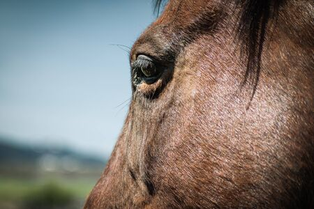 Close-up focus on a brown horse`s eye against a blue sky and bokeh background.