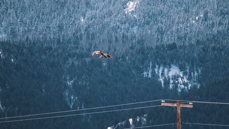Two geese mates fly over electric wires, as they make their way to a snow-covered mountainside in a rural winter scene.