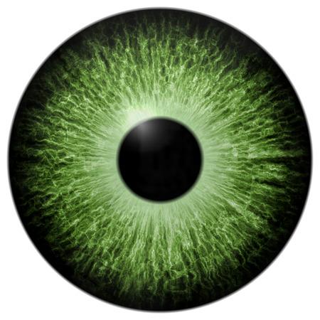 eye green: Ilustraci�n de ojo verde aislado en blanco Foto de archivo