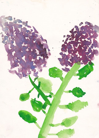 7 year old girl: Original scanned picture of 7 year old girl - syringa (lllac) watercolor illustration