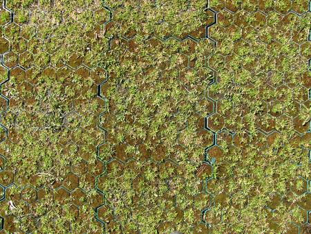 adoquines: Detalle foto de adoquines de c�sped de hierba musgo y edad Foto de archivo