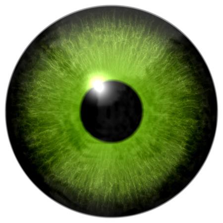 eye green: Ilustraci�n ojo verde aislado en el fondo blanco Foto de archivo