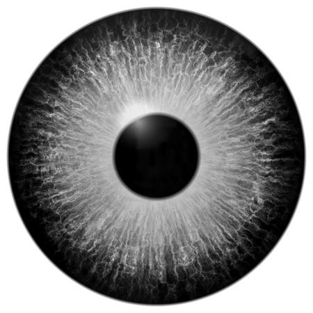 白い背景の上の灰色の目に隔離された図 写真素材