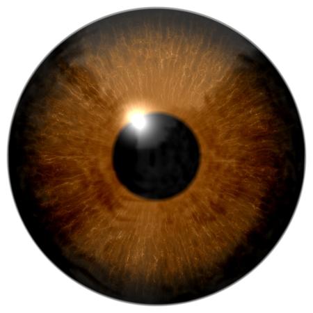 retina: Brown eye eyeball, retina, pupil, iris illustration isolated on white background Stock Photo