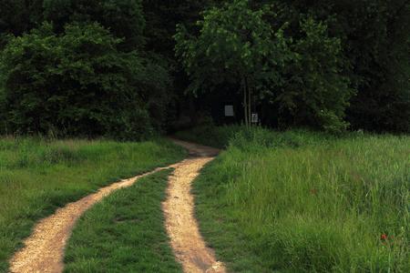 chemin sombre de la forêt avec des ornières