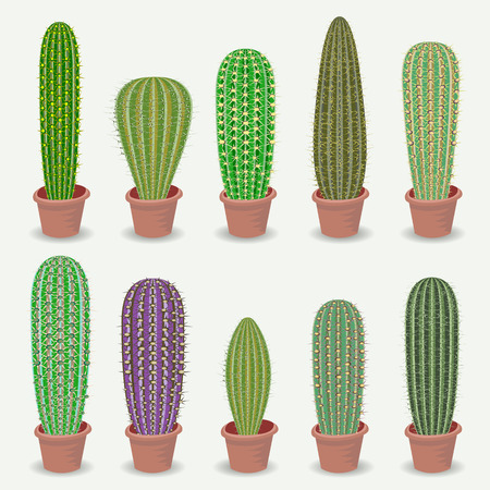 types of cactus: Different types of cactus plants realistic decorative icons set Isolated vector illustration. Illustration