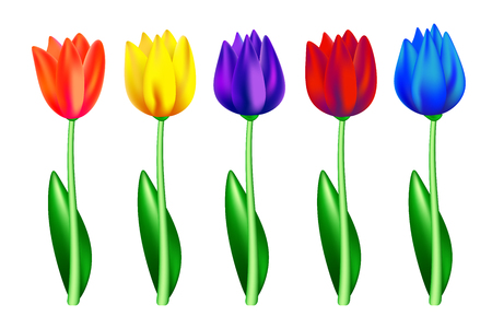 Tulip flowers of various colors isolated on white background.