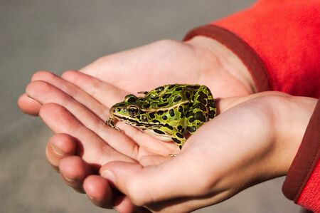 A boy holding his pet frog