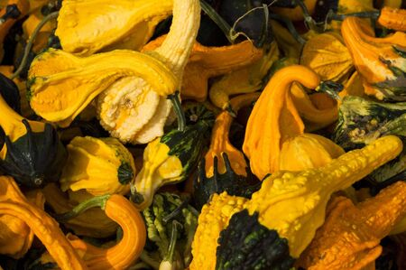 A box of colorful gourds in the fall
