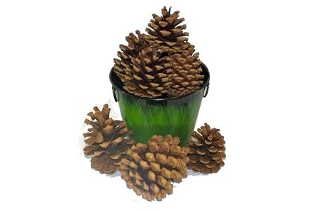 A green pail full of pine cones Stock Photo