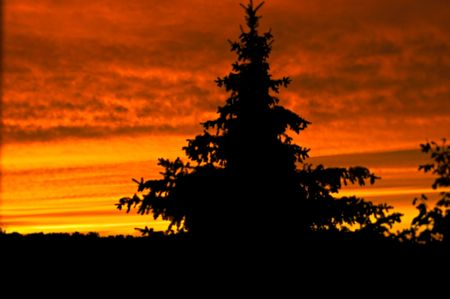 A pine tree stands in front of a beautiful sunset Stock Photo