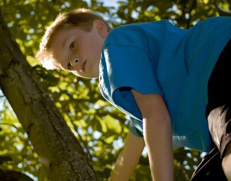 ni�o escalando: Un ni�o escalar un �rbol en un d�a soleado Foto de archivo