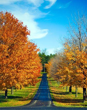 A road travels between autumn trees