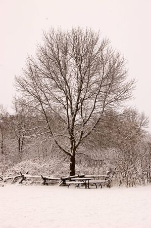 A lone snow covered tree on a wintery day