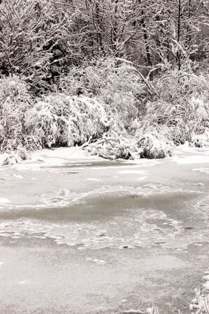 A forest of snow covered trees in front of a frozen stream Stock Photo
