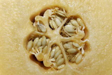A macro shot of the core of a melon Stock Photo