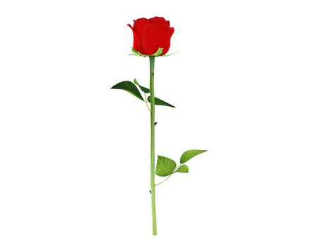 Red rose with two leaf for gift someone you love white background image icon of beautiful romantic elegance