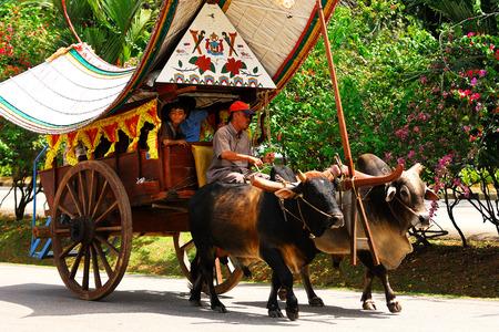 bullock animal: Bullock Cart Ride, Malacca, Malaysia.