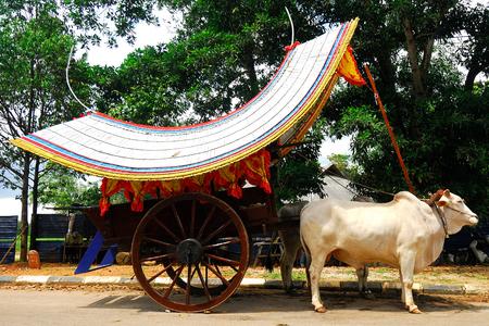 cart: Bullock Cart Ride, Malacca, Malaysia.