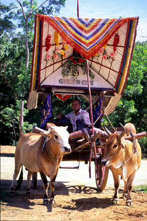 bullock: Bullock Cart,Malacca, Malaysia. Editorial